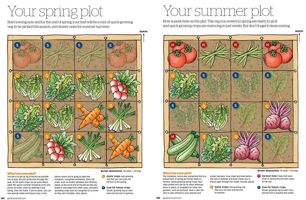 Vegetable illustrations for Gardeners' World Magazine