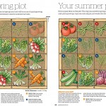Vegetable illustrations for Gardeners' World Magazine