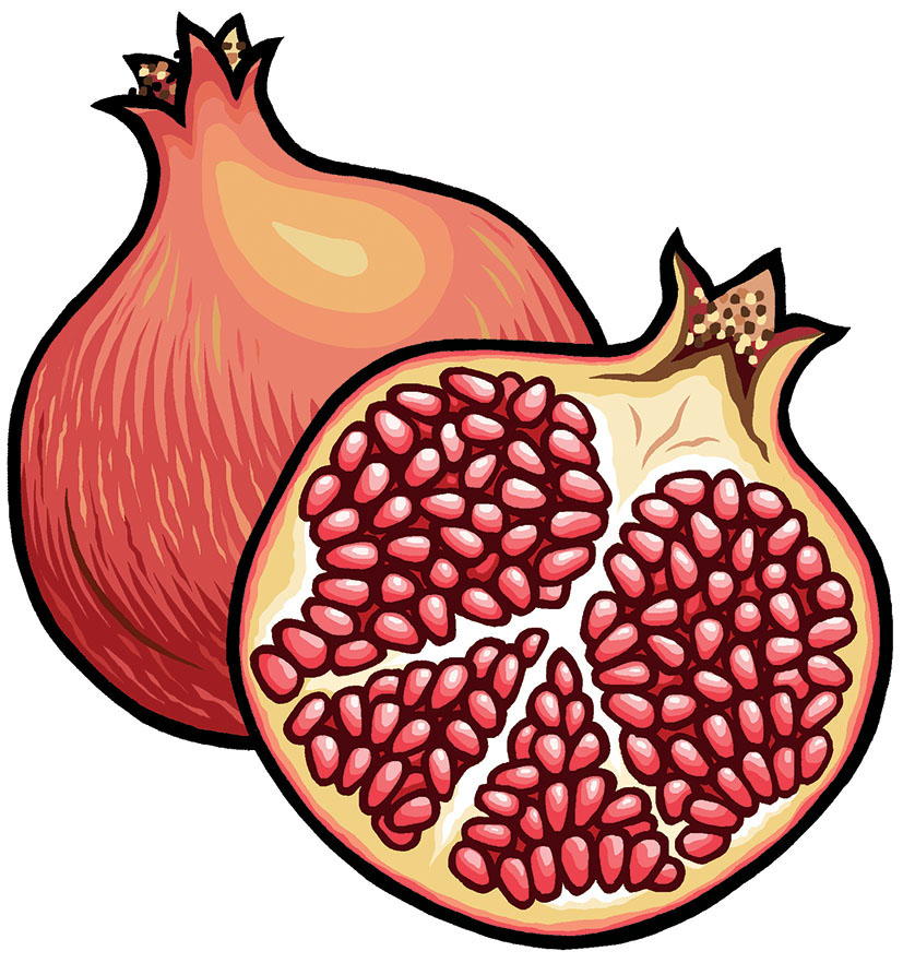 Pomegranate cover illustration for Reaktion Books - Edible Series