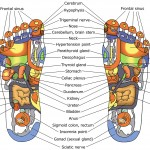 Reflexology diagram for City and Guilds