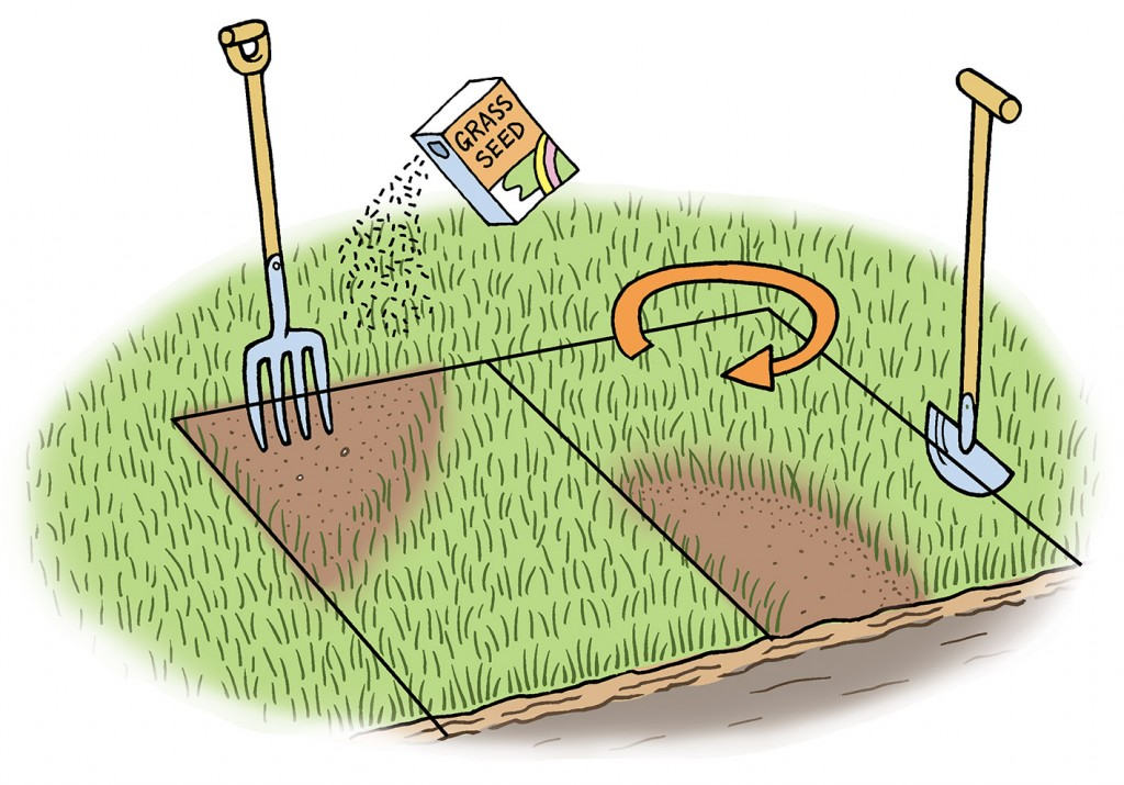 Lawn care diagram for Gardeners' World Magazine
